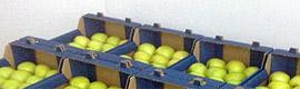 hp-box-fruit2